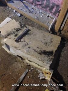 Moisissures sur des matériaux poreux