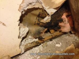 détection de moisissures sur des matériaux à la résidence